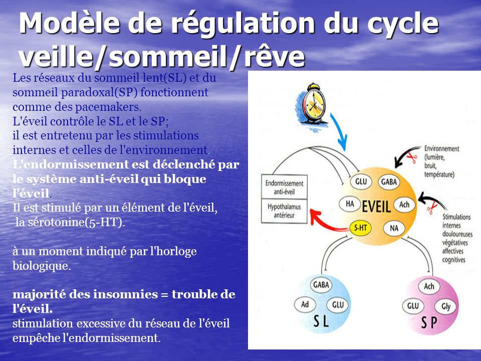 Modèle de régulation du cycle veille/sommeil/rêve Les réseaux du sommeil lent(SL) et du sommeil paradoxal(SP) fonctionnent comme des pacemakers. L'éve