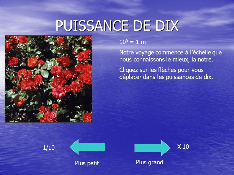PUISSANCE DE DIX Plus petit Plus grand 1/10 X 10 10 0 = 1 m Notre voyage commence à léchelle que nous connaissons le mieux, la notre. Cliquez sur les