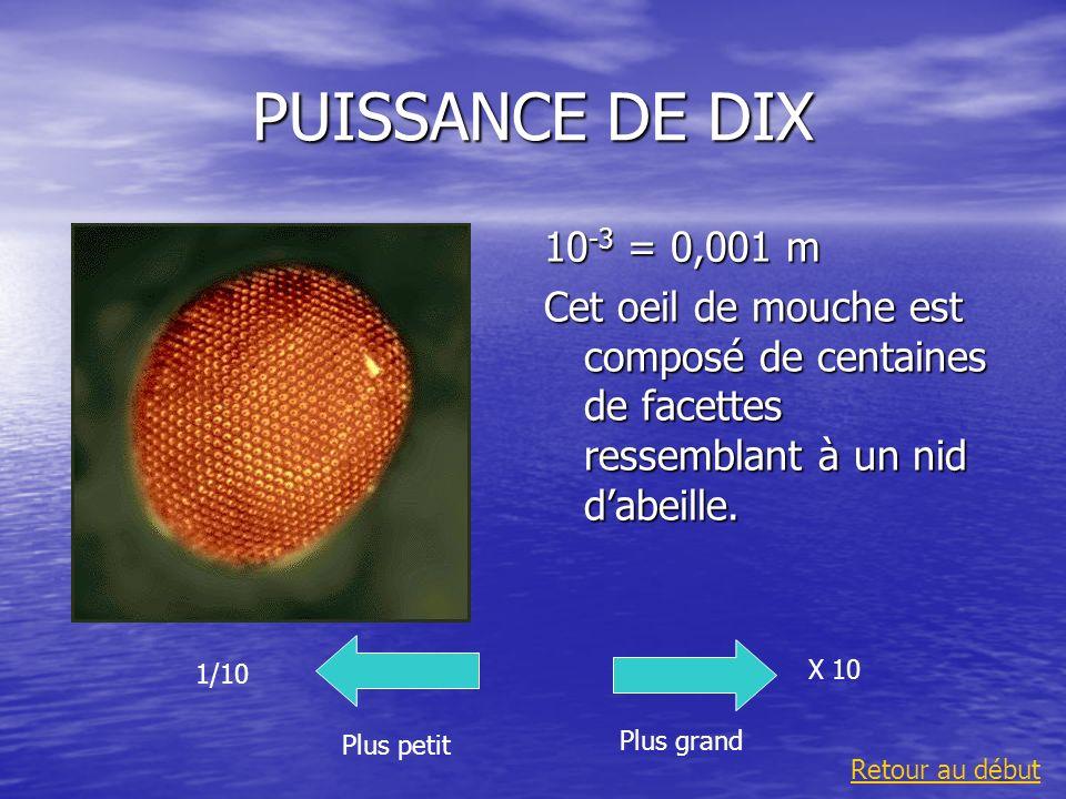PUISSANCE DE DIX 10 -3 = 0,001 m Cet oeil de mouche est composé de centaines de facettes ressemblant à un nid dabeille. Plus grand 1/10 Plus petit X 1
