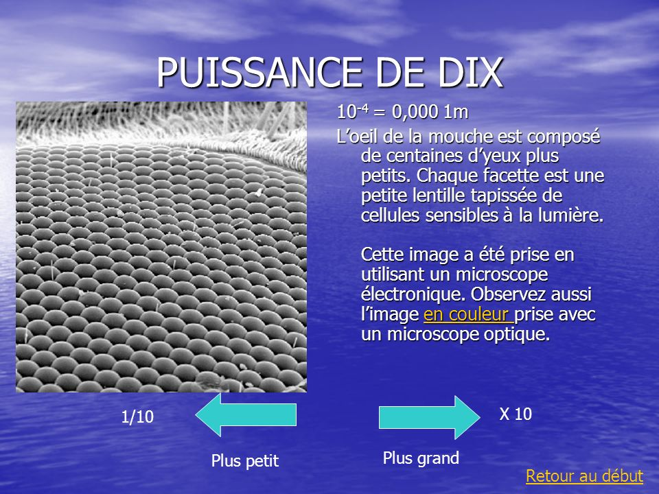 PUISSANCE DE DIX 10 -4 = 0,000 1m Loeil de la mouche est composé de centaines dyeux plus petits. Chaque facette est une petite lentille tapissée de ce