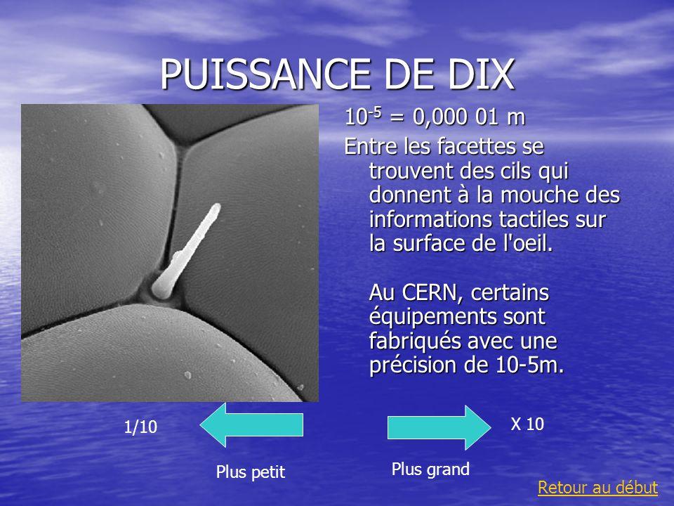 PUISSANCE DE DIX 10 -5 = 0,000 01 m Entre les facettes se trouvent des cils qui donnent à la mouche des informations tactiles sur la surface de l'oeil