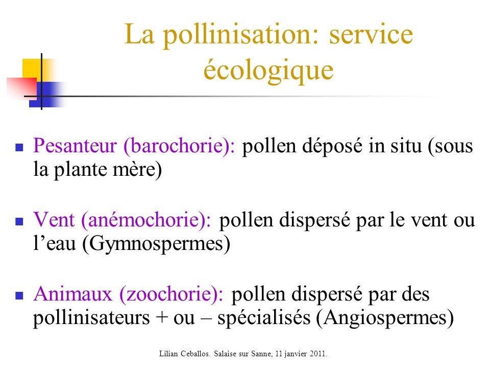La pollinisation: service écologique Pesanteur (barochorie): pollen déposé in situ (sous la plante mère) Vent (anémochorie): pollen dispersé par le ve