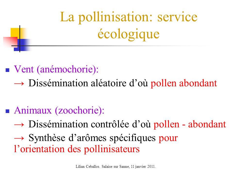 La pollinisation: service écologique Vent (anémochorie): Dissémination aléatoire doù pollen abondant Animaux (zoochorie): Dissémination contrôlée doù