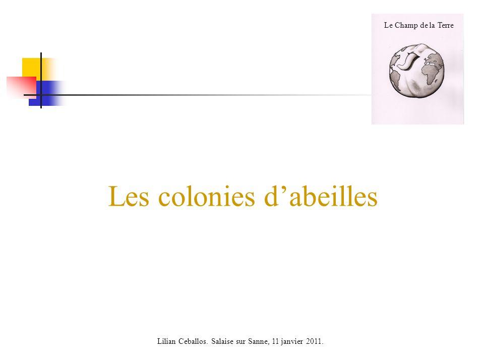 Les colonies dabeilles Le Champ de la Terre Lilian Ceballos. Salaise sur Sanne, 11 janvier 2011.