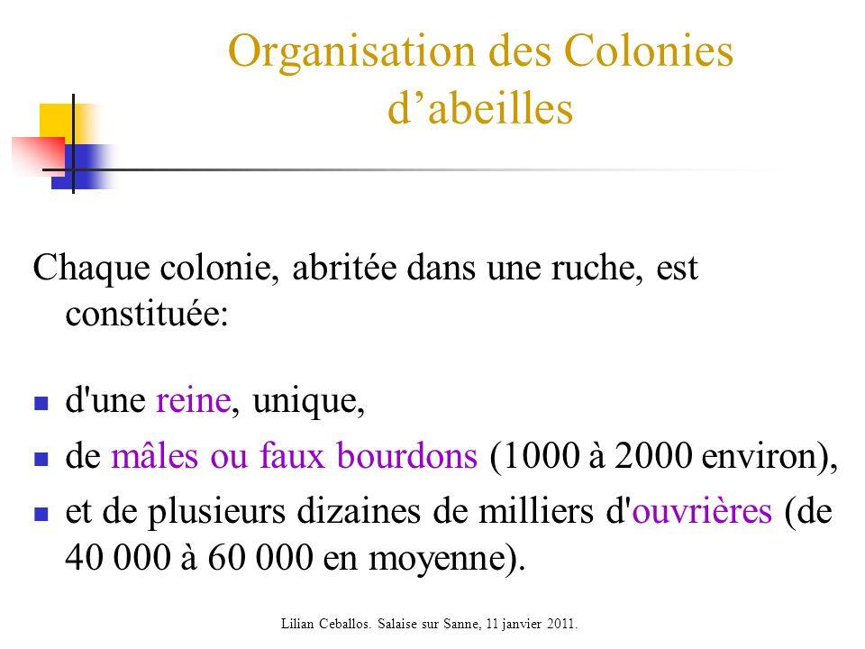 Organisation des Colonies dabeilles Chaque colonie, abritée dans une ruche, est constituée: d'une reine, unique, de mâles ou faux bourdons (1000 à 200