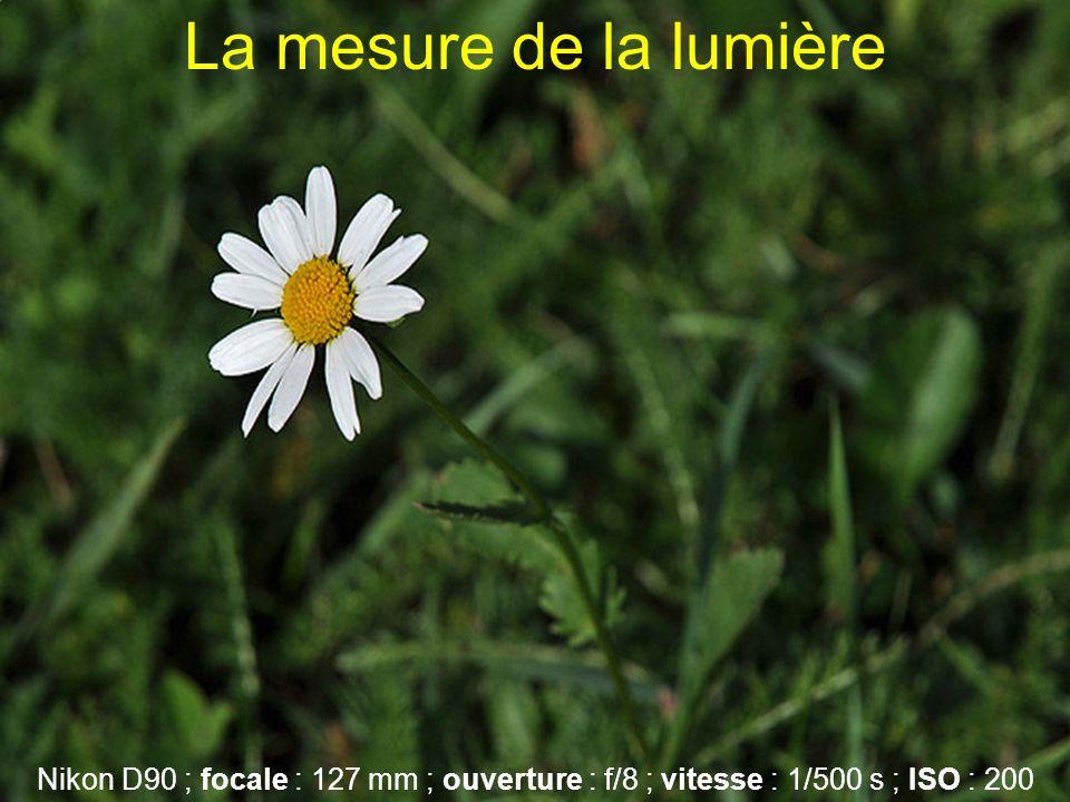 La mesure de la lumière Nikon D90 ; focale : 127 mm ; ouverture : f/8 ; vitesse : 1/500 s ; ISO : 200