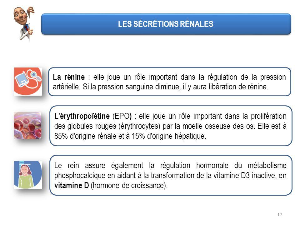 17 LES SÉCRÉTIONS RÉNALES La rénine : elle joue un rôle important dans la régulation de la pression artérielle. Si la pression sanguine diminue, il y