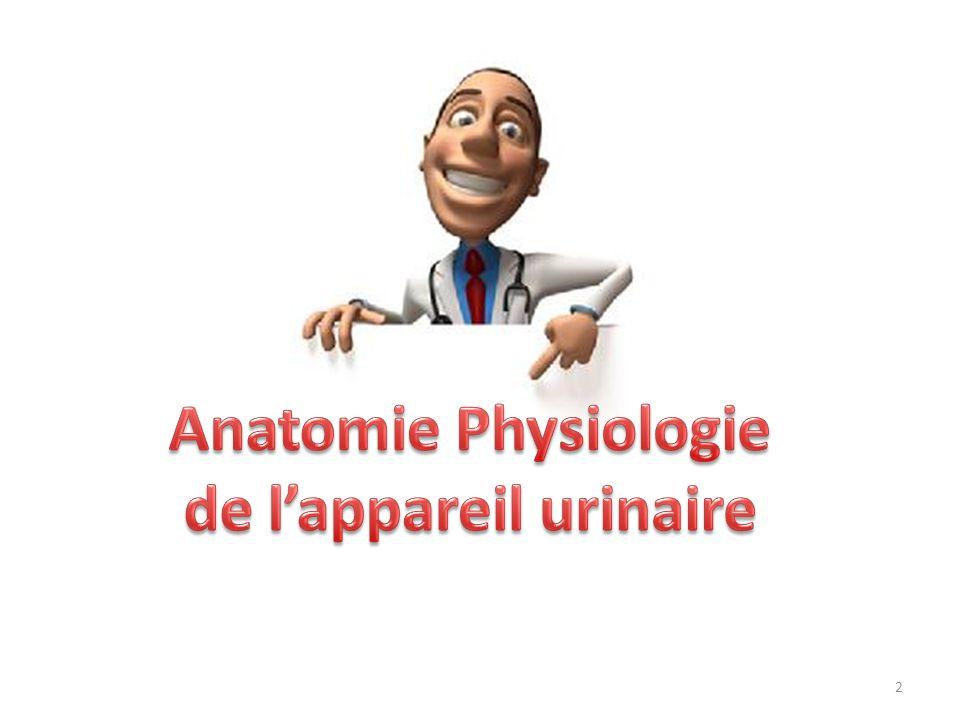3 Lappareil urinaire joue un rôle majeur dans le maintien de lhoméostasie.