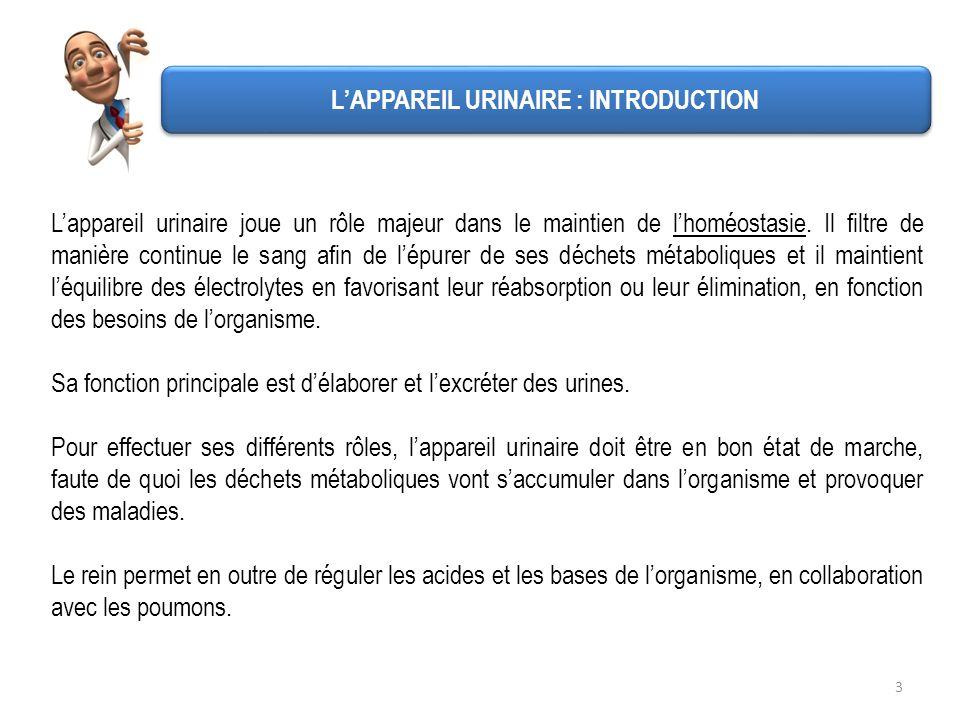 Lappareil urinaire comprend : - Deux reins dont le rôle est lépuration du sang et lélaboration de lurine - Deux uretères qui permettent à lurine de des- cendre vers le lieu de stockage - Une vessie qui est le lieu de stockage des urines entre deux mictions - Un urètre qui est le canal excréteur de lurine lors de la miction.