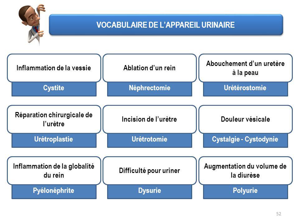 Cystite 52 VOCABULAIRE DE LAPPAREIL URINAIRE Inflammation de la vessie Néphrectomie Ablation dun rein Urétérostomie Abouchement dun uretère à la peau
