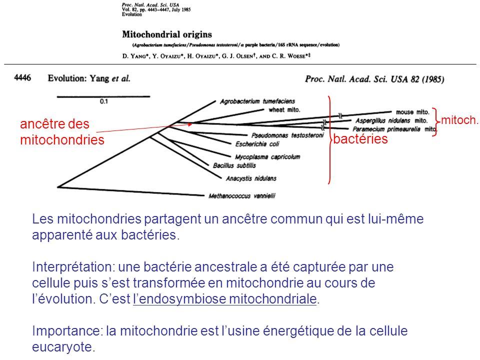 Les mitochondries partagent un ancêtre commun qui est lui-même apparenté aux bactéries. Interprétation: une bactérie ancestrale a été capturée par une
