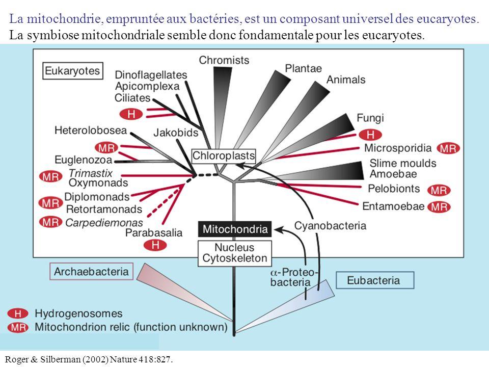 La mitochondrie, empruntée aux bactéries, est un composant universel des eucaryotes. La symbiose mitochondriale semble donc fondamentale pour les euca