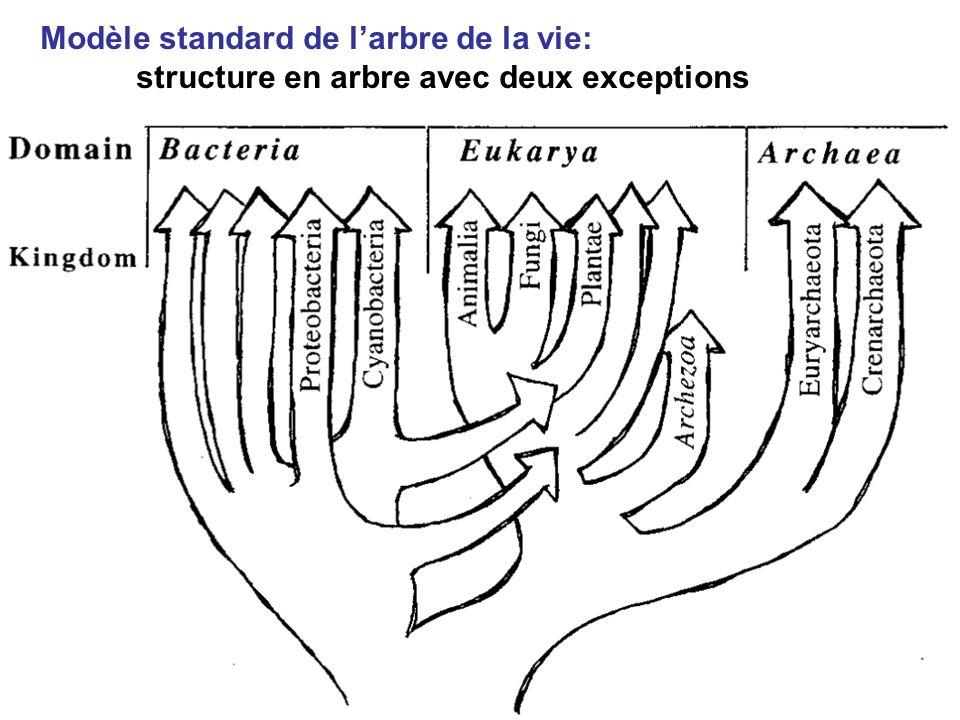 Modèle standard de larbre de la vie: structure en arbre avec deux exceptions
