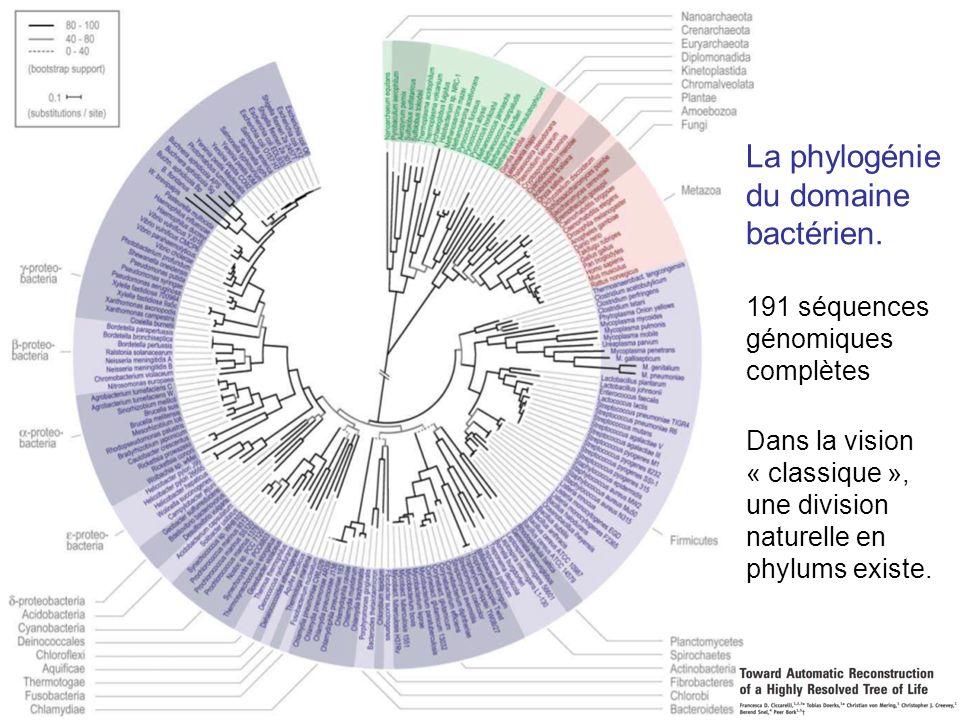 La phylogénie du domaine bactérien. 191 séquences génomiques complètes Dans la vision « classique », une division naturelle en phylums existe.