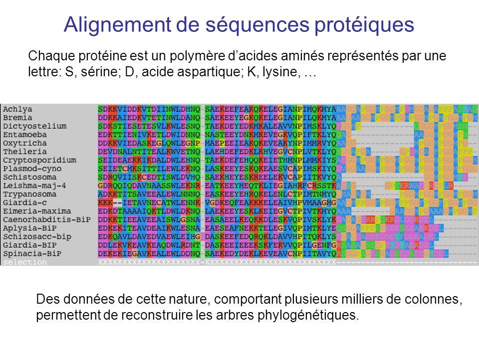 Alignement de séquences protéiques Chaque protéine est un polymère dacides aminés représentés par une lettre: S, sérine; D, acide aspartique; K, lysin