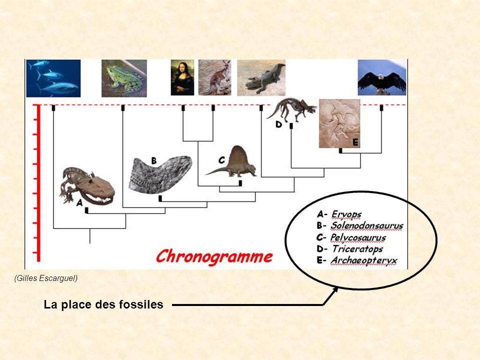 La place des fossiles (Gilles Escarguel)