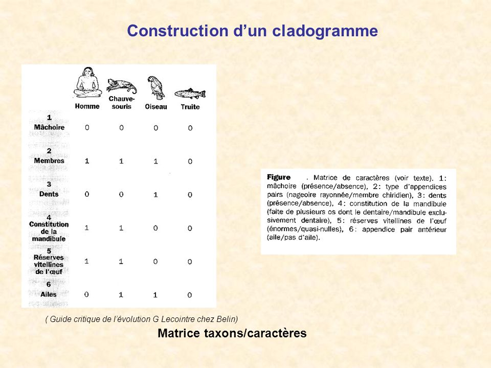 Construction dun cladogramme Matrice taxons/caractères ( Guide critique de lévolution G Lecointre chez Belin)