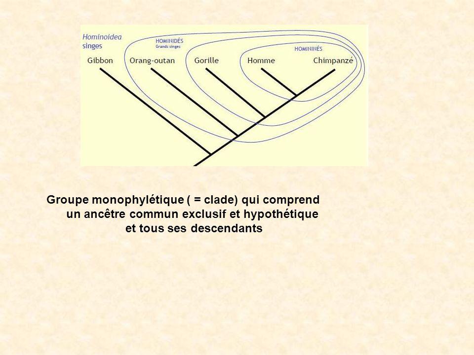 Groupe monophylétique ( = clade) qui comprend un ancêtre commun exclusif et hypothétique et tous ses descendants