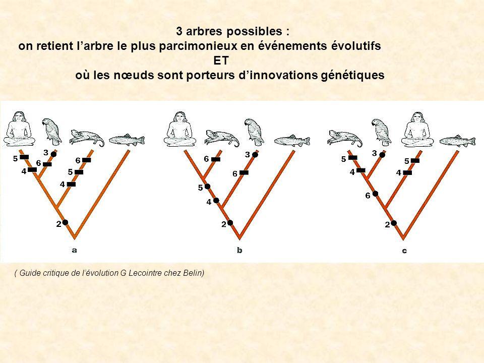 3 arbres possibles : on retient larbre le plus parcimonieux en événements évolutifs ET où les nœuds sont porteurs dinnovations génétiques ( Guide crit