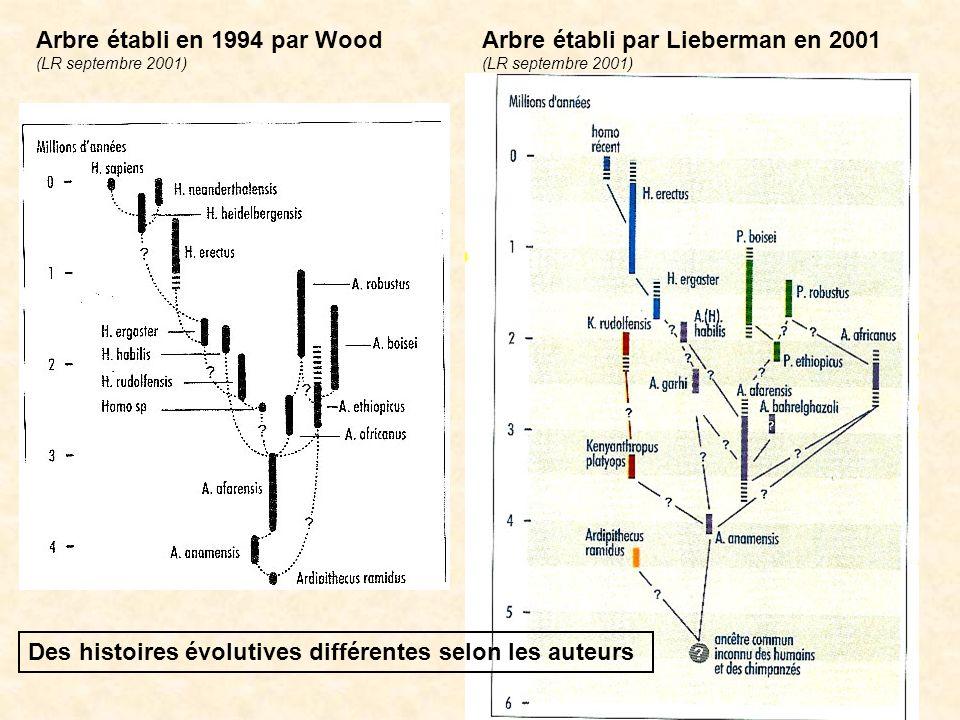 Arbre établi en 1994 par Wood (LR septembre 2001) Des histoires évolutives différentes selon les auteurs Arbre établi par Lieberman en 2001 (LR septem