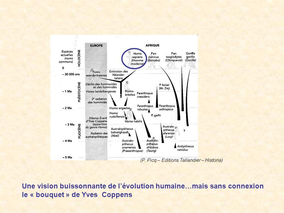 (P. Picq – Editions Tallandier – Historia) Une vision buissonnante de lévolution humaine…mais sans connexion le « bouquet » de Yves Coppens