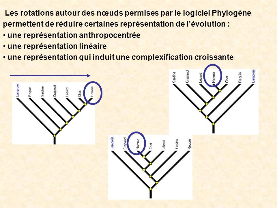 Les rotations autour des nœuds permises par le logiciel Phylogène permettent de réduire certaines représentation de lévolution : une représentation an