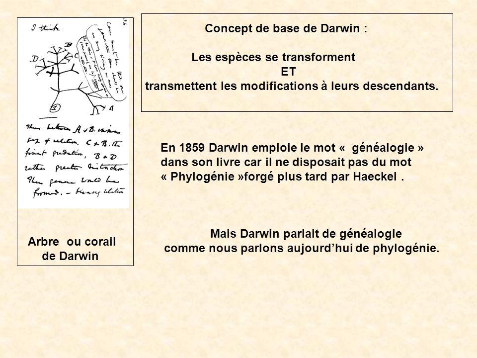 Concept de base de Darwin : Les espèces se transforment ET transmettent les modifications à leurs descendants. En 1859 Darwin emploie le mot « généalo