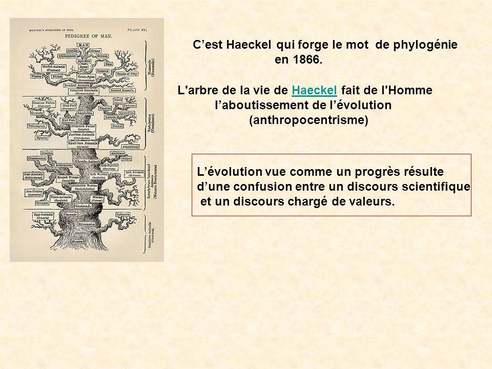 Cest Haeckel qui forge le mot de phylogénie en 1866. L'arbre de la vie de Haeckel fait de l'HommeHaeckel laboutissement de lévolution (anthropocentris