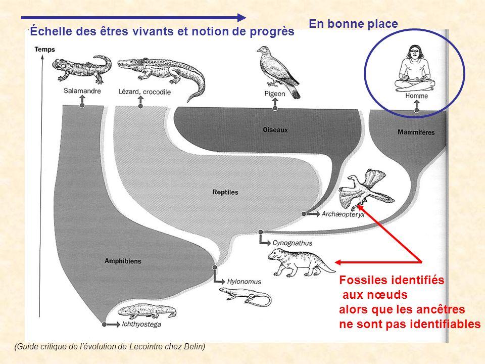 Fossiles identifiés aux nœuds alors que les ancêtres ne sont pas identifiables Échelle des êtres vivants et notion de progrès En bonne place (Guide cr