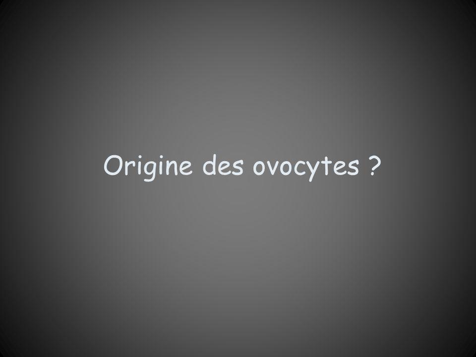 Origine des ovocytes ?