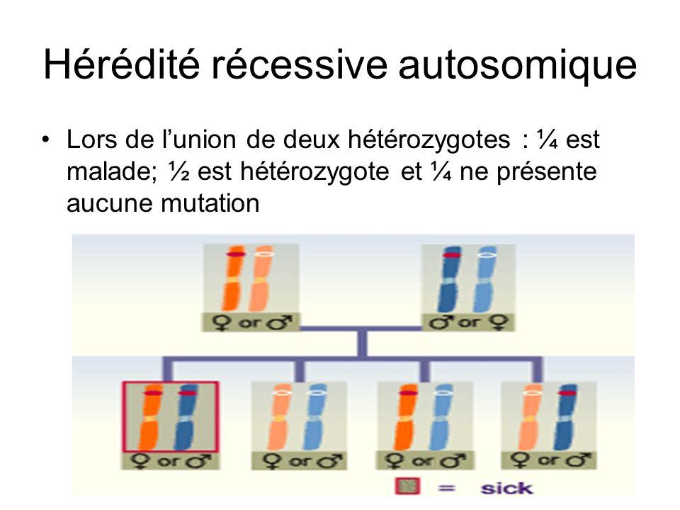 Hérédité récessive autosomique Lors de lunion de deux hétérozygotes : ¼ est malade; ½ est hétérozygote et ¼ ne présente aucune mutation