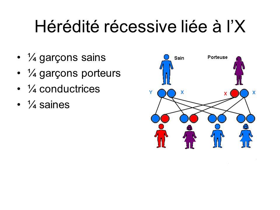 Hérédité récessive liée à lX ¼ garçons sains ¼ garçons porteurs ¼ conductrices ¼ saines