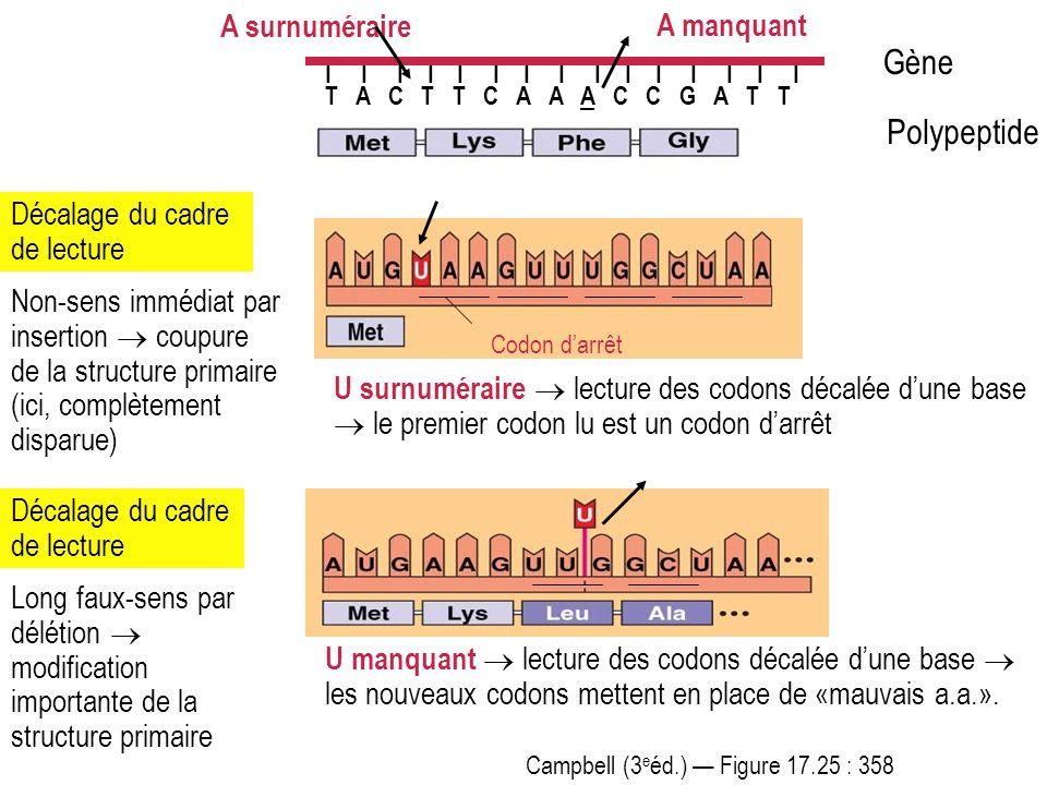 Campbell (3 e éd.) Figure 17.25 : 358 I I I I I I I I I I I I I I I T A C T T C A A A C C G A T T Polypeptide Gène Décalage du cadre de lecture U surn