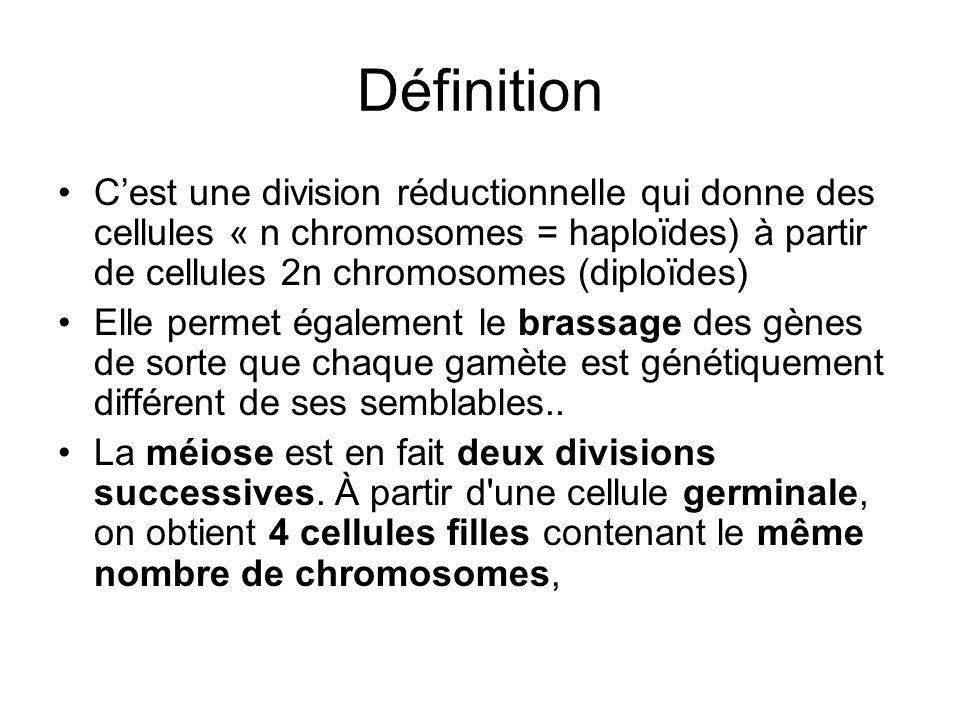 Définition Cest une division réductionnelle qui donne des cellules « n chromosomes = haploïdes) à partir de cellules 2n chromosomes (diploïdes) Elle p