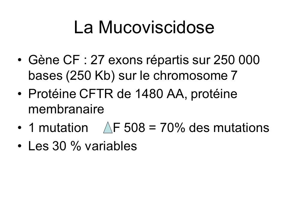 La Mucoviscidose Gène CF : 27 exons répartis sur 250 000 bases (250 Kb) sur le chromosome 7 Protéine CFTR de 1480 AA, protéine membranaire 1 mutation