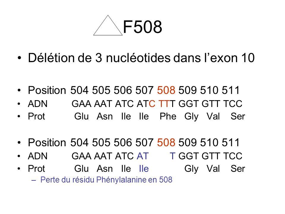 F508 Délétion de 3 nucléotides dans lexon 10 Position 504 505 506 507 508 509 510 511 ADN GAA AAT ATC ATC TTT GGT GTT TCC Prot Glu Asn Ile Ile Phe Gly