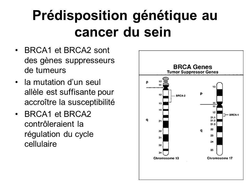 Prédisposition génétique au cancer du sein BRCA1 et BRCA2 sont des gènes suppresseurs de tumeurs la mutation dun seul allèle est suffisante pour accro
