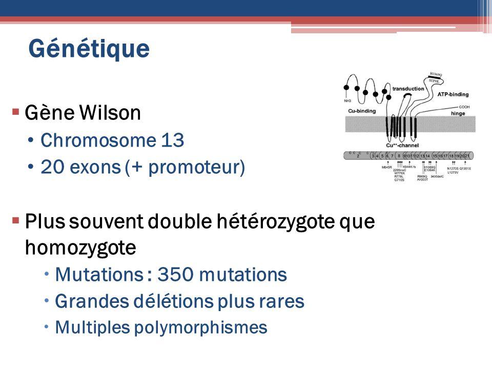 Génétique Gène Wilson Chromosome 13 20 exons (+ promoteur) Plus souvent double hétérozygote que homozygote Mutations : 350 mutations Grandes délétions