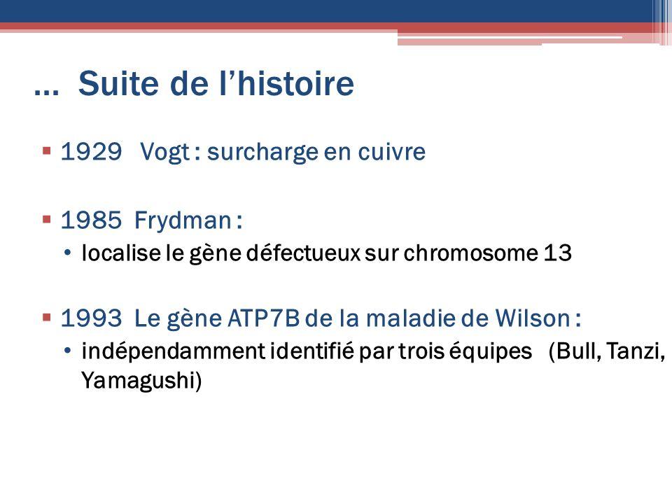 ... Suite de lhistoire 1929 Vogt : surcharge en cuivre 1985 Frydman : localise le gène défectueux sur chromosome 13 1993 Le gène ATP7B de la maladie d