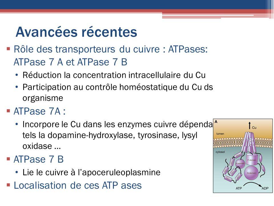 Avancées récentes Rôle des transporteurs du cuivre : ATPases: ATPase 7 A et ATPase 7 B Réduction la concentration intracellulaire du Cu Participation