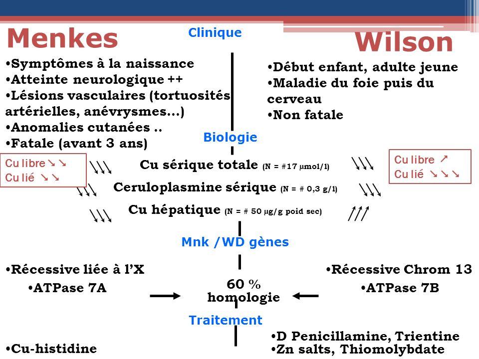 Clinique Menkes Wilson Biologie Mnk /WD gènes Traitement Cu sérique totale (N = #17 µmol/l) Ceruloplasmine sérique (N = # 0,3 g/l) Cu hépatique (N = #