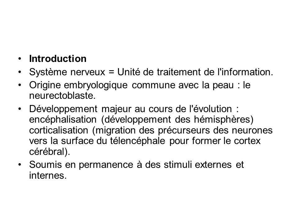 Introduction Système nerveux = Unité de traitement de l'information. Origine embryologique commune avec la peau : le neurectoblaste. Développement maj