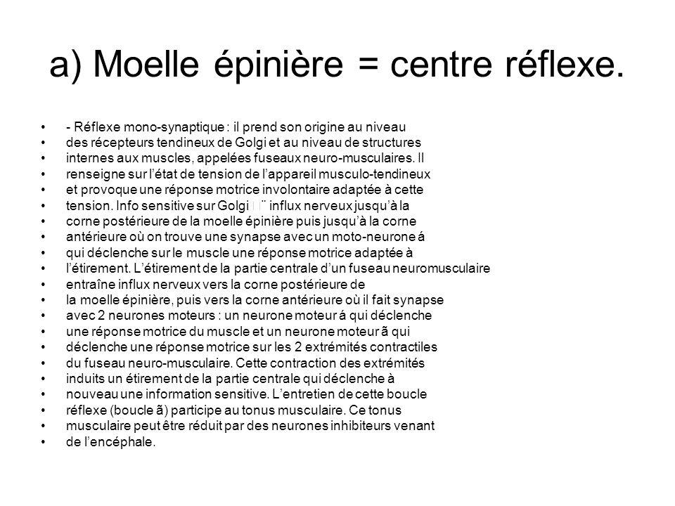 a) Moelle épinière = centre réflexe. - Réflexe mono-synaptique : il prend son origine au niveau des récepteurs tendineux de Golgi et au niveau de stru