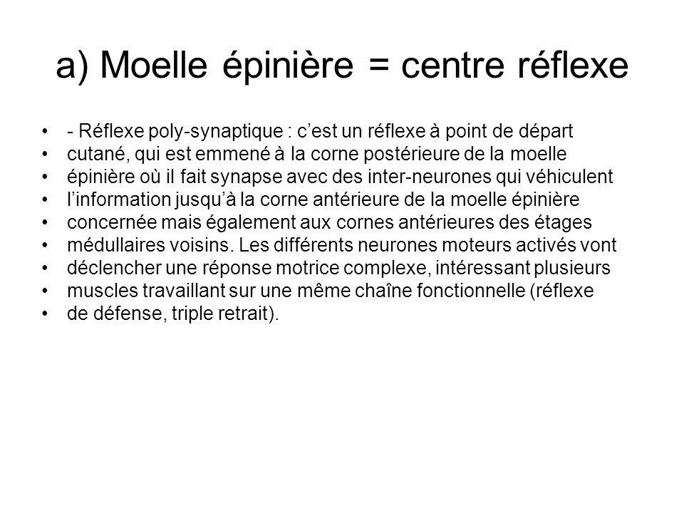 a) Moelle épinière = centre réflexe - Réflexe poly-synaptique : cest un réflexe à point de départ cutané, qui est emmené à la corne postérieure de la