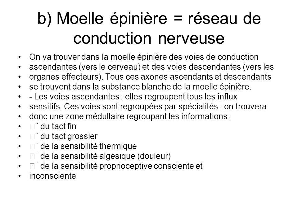 b) Moelle épinière = réseau de conduction nerveuse On va trouver dans la moelle épinière des voies de conduction ascendantes (vers le cerveau) et des