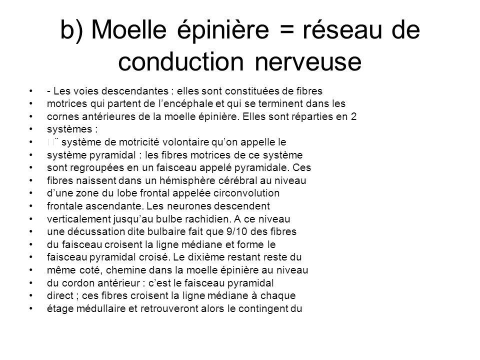 b) Moelle épinière = réseau de conduction nerveuse - Les voies descendantes : elles sont constituées de fibres motrices qui partent de lencéphale et q