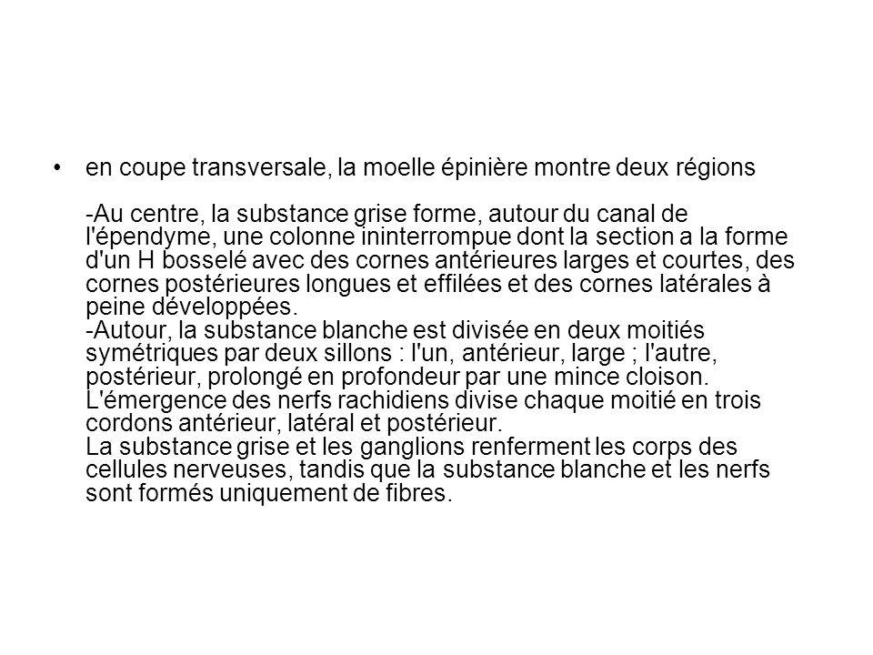 a) Moelle épinière = centre réflexe.