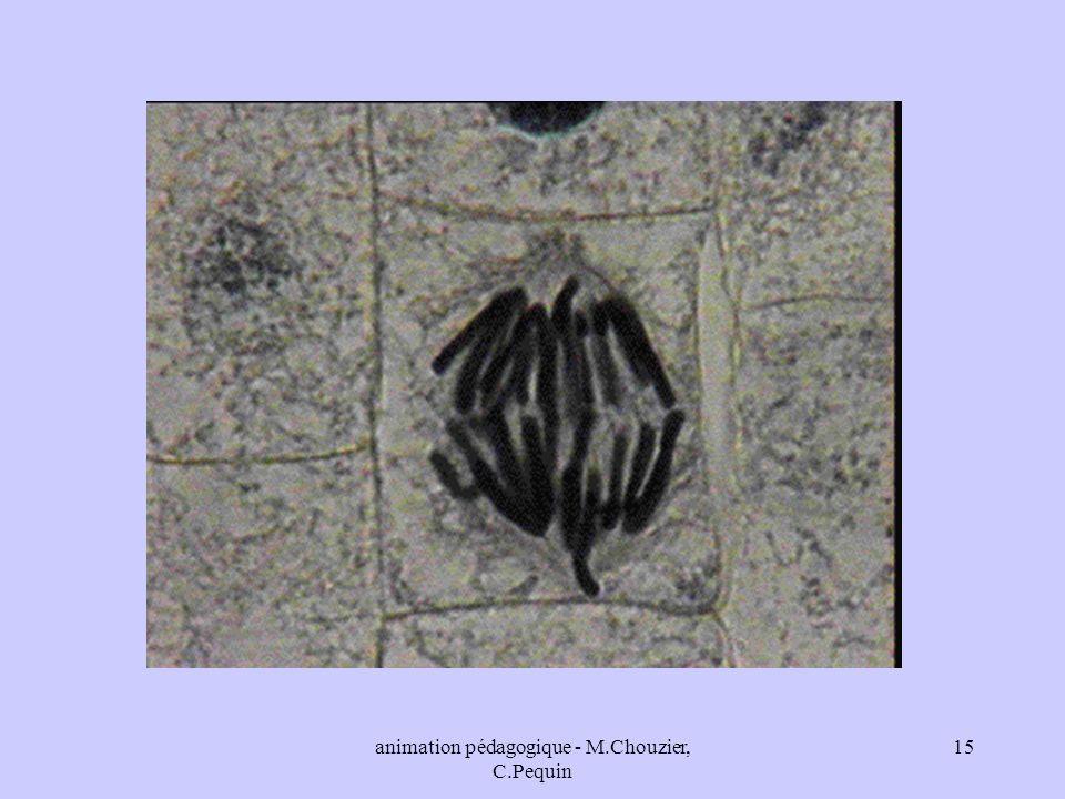 animation pédagogique - M.Chouzier, C.Pequin 15
