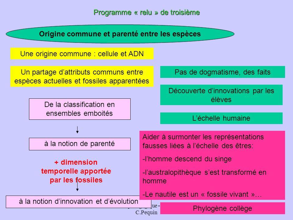 animation pédagogique - M.Chouzier, C.Pequin 23 Origine commune et parenté entre les espèces Programme « relu » de troisième à la notion de parenté Un