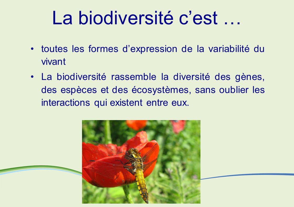 La biodiversité cest … toutes les formes dexpression de la variabilité du vivant La biodiversité rassemble la diversité des gènes, des espèces et des